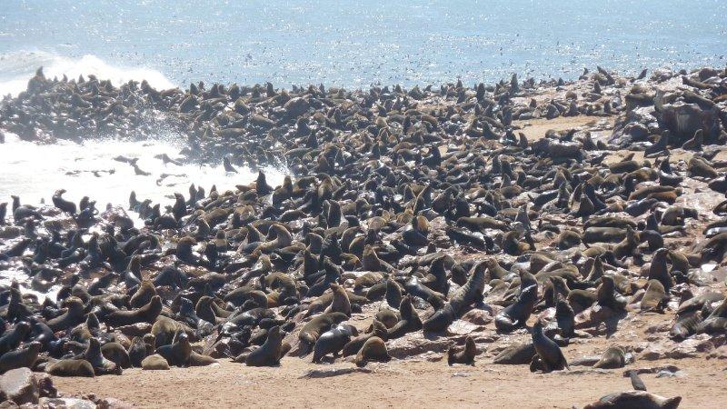 Seals at Cape Cross, Skeleton Coast,  Namibia
