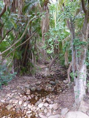 Botanical Gardens at Kirstenbosch