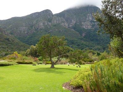 Mountains at Kirstenbosch
