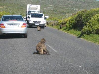 4_baboons.jpg