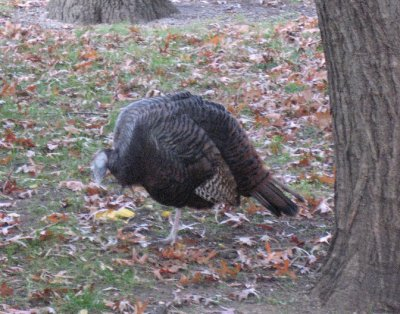 Local wildlife in Battery Park