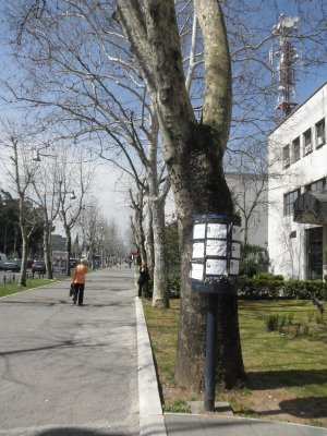 To spare the trees, they have separate pillars to put the deceased adds.