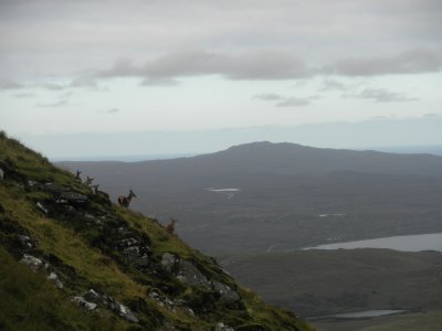 Ben Loyal: Red deer on the way going up