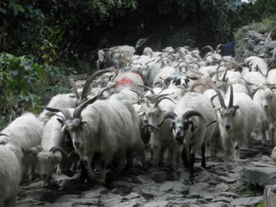 You do not see hordes of tourists but you do encounter herds of sheep/goats rather frequently