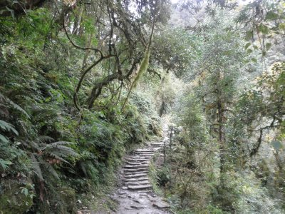 The endless rocky stairs in the lush forest in the Annapurna region