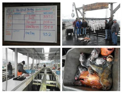 Interesting to see the commercial fishing. The fish they caught will be cleaned and shipped home. In the halibut derby the largest was 150 kg!!!
