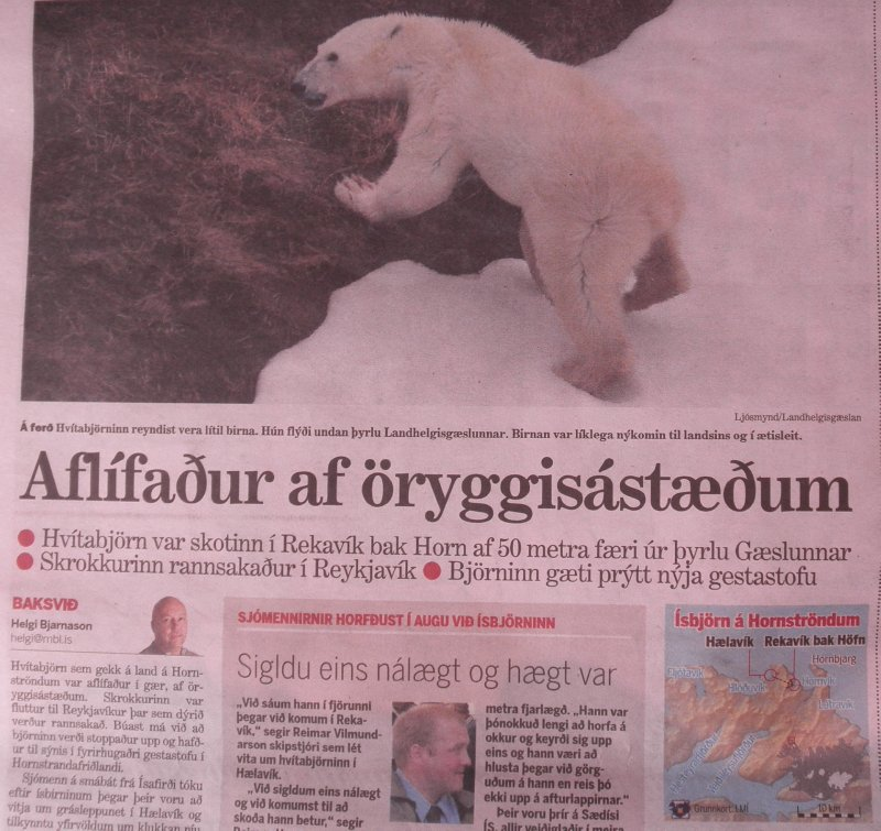 Our fisherman who had dropped us in Hornstrandir, spotted a polar bear in the area where we were back country skiing. Result: they shot the polar bear and checked its stomach on some Dutch tourists...