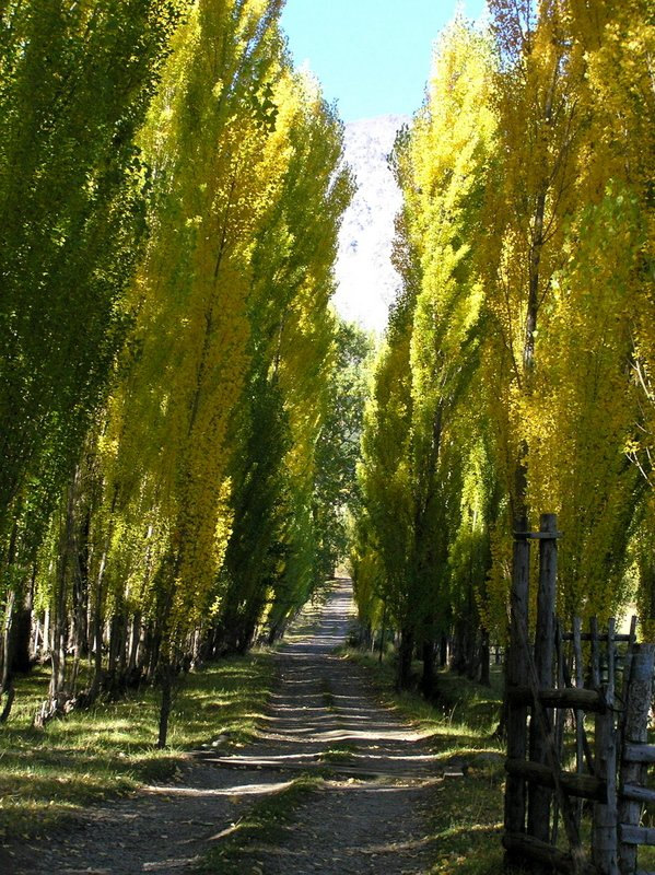 Tree Lined Road to Chakra-- mini farm