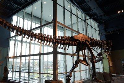 The Tyrannosaurus Rex.