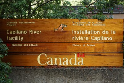 Capilano River Hatchery.