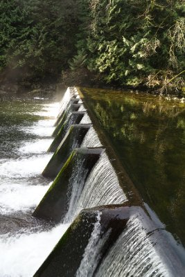 A weir on the Capilano River at the Capilano Hatchery.