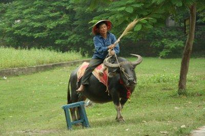 Vietnam 131