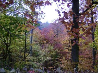Wilhelmshoher Trees