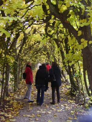 Castle Tree Arch in Kassel