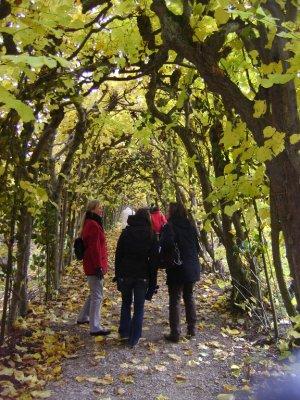 Castle Tree Arch in Kassel
