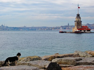 Istanbul: a city of mosques, cats and Bosphorus
