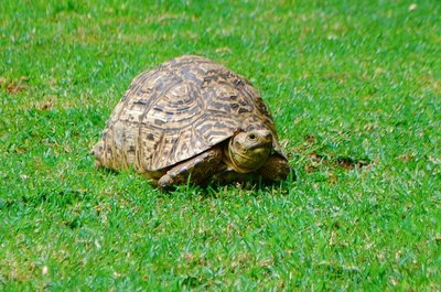 There were tortoises roaming on the hotel ground