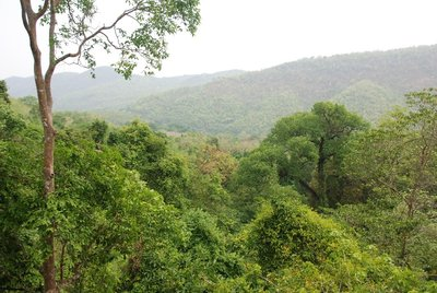 Lush green forests along the path up to the top falls