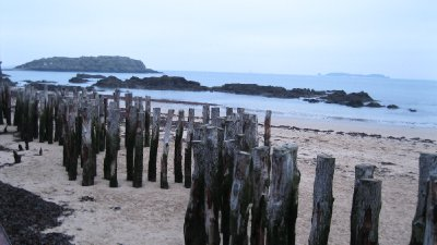 Old mussel posts along the beach