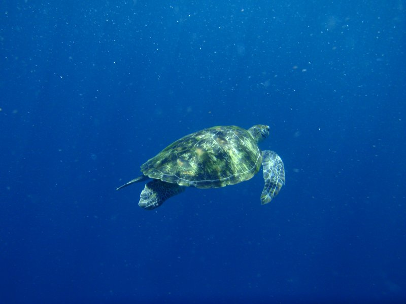 Geen Turtle 2 (2)