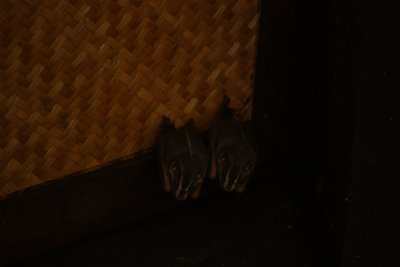 Our pet bats