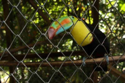 This toucan was big!