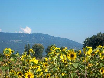 swiss_countryside.jpg