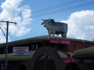 2013 S ep 9 Bull on roof in Rockhampton