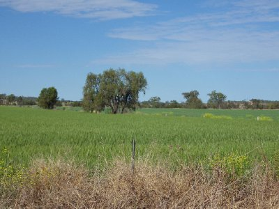 2013 Sep 15 Darling Downs Grain 1