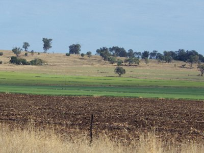 2013 Sep 15 Darling Downs Grain 3