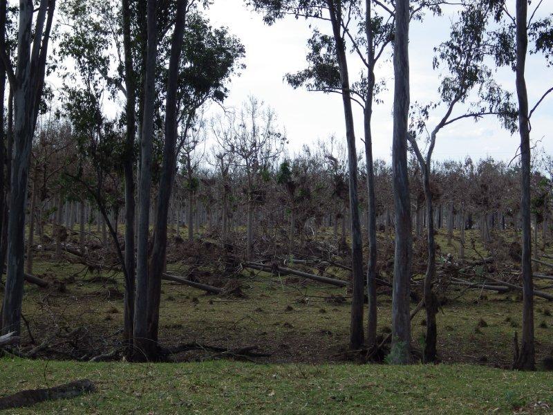 2013 Sep 13 Trees at Ceratodus