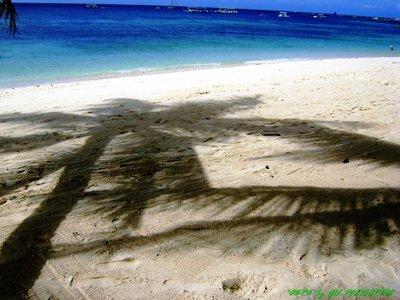 coconut shadow