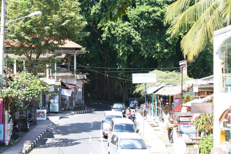 large_2010_03_15.._Forest.jpg