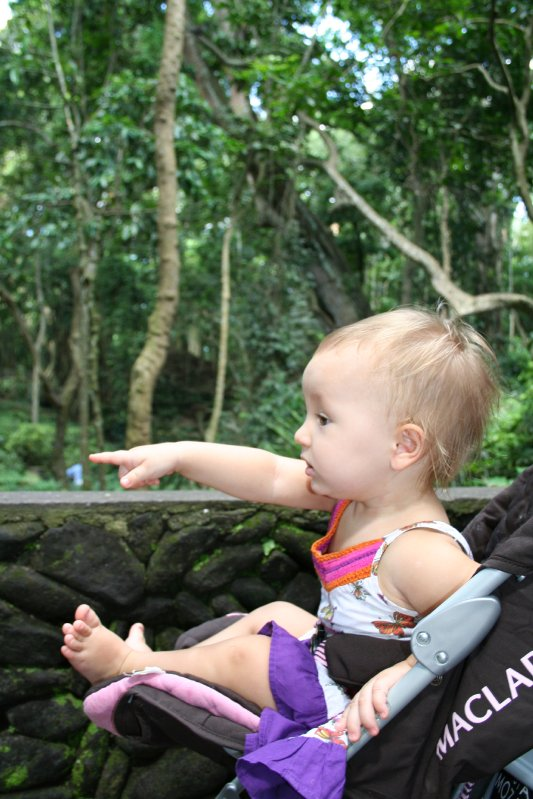 large_62010_03_15.._Forest.jpg