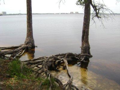Texas_Loui..ppi_690.jpg