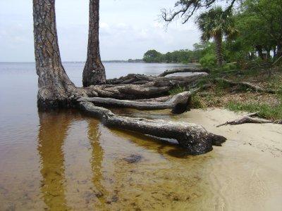 Texas_Loui..ppi_701.jpg
