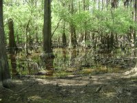 Caddo_Lake_LA_013.jpg