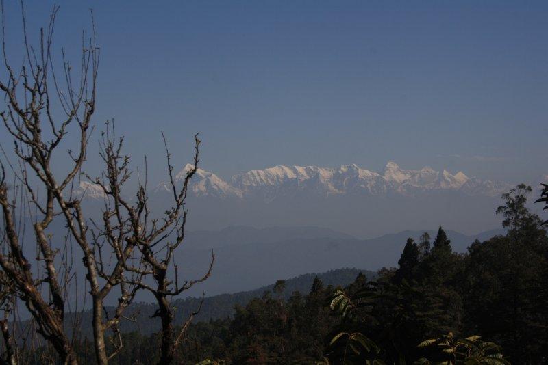 large_2__Himalay..atia_garden.jpg