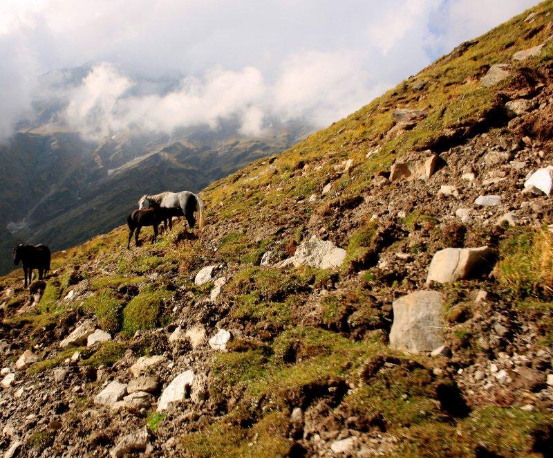 Horses & Mountains