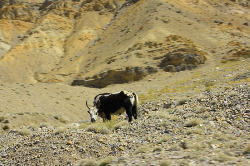 large_Spiti_and_..ley_467.jpg