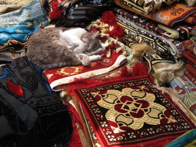 Cat on Carpet Istanbul