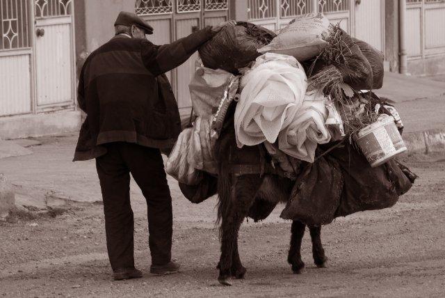Donkey at Mardin