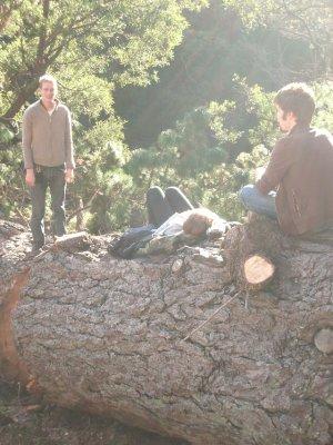 Sleeping on a tree