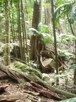 Jungle1