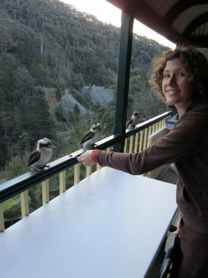 sara feed kookaburas