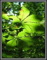 Leaves #2