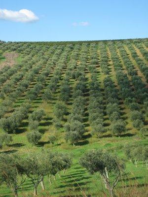 Oliven...