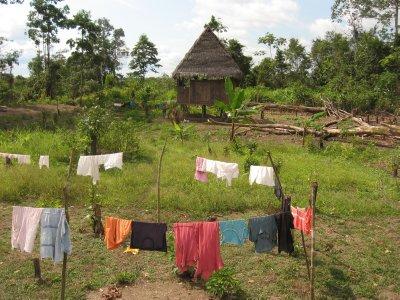 Haus im Dschungel