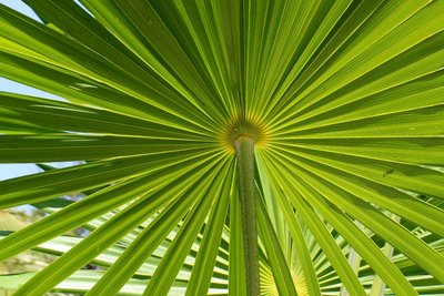 Small palms in Mexico