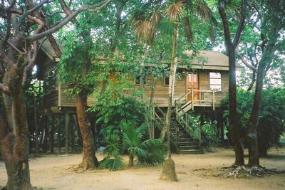 Tree house, Roatan Island